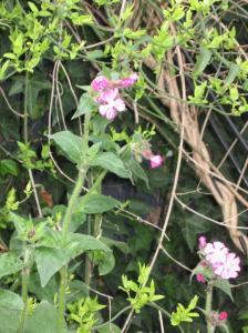 Herbs & History Walk Spring 2015